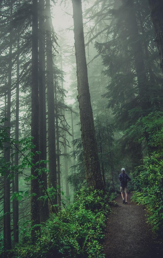 Man Walking Through Green Forest With Mist.jpg