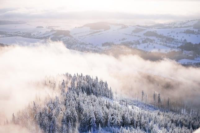 fog-in-snowy-forest.jpg